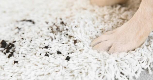 hygiène chien chat tapis