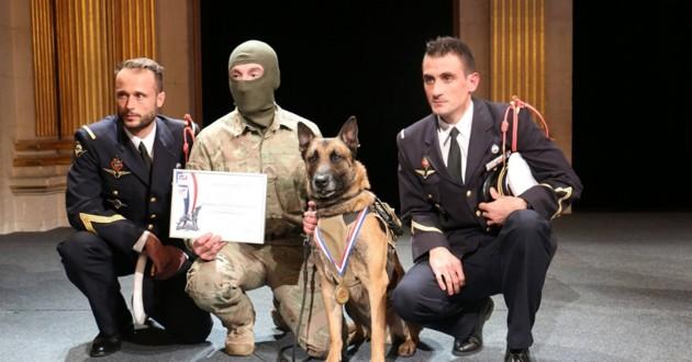trophée des chiens héros