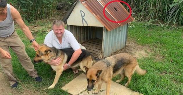 chiens devant leur niche