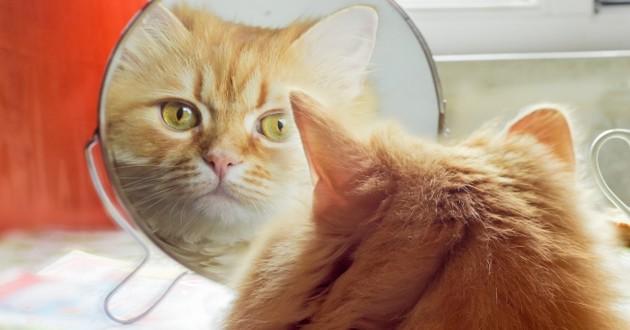 Les chiens et les chats ont-ils conscience de leur image ?
