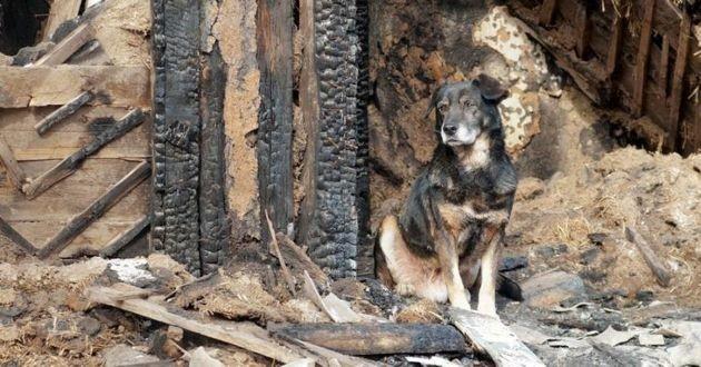 chien dans une maison incendiée