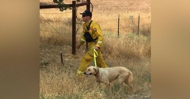 incendie chienne sauvée pompier