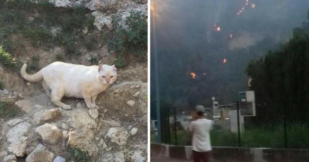 chats incendie refuge carros var
