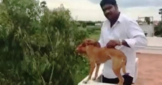 Vidéo indien jette chien