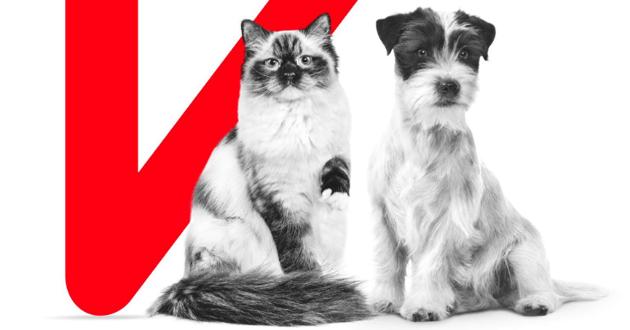 Individualis : l'alimentation sur-mesure de Royal Canin faite par votre vétérinaire
