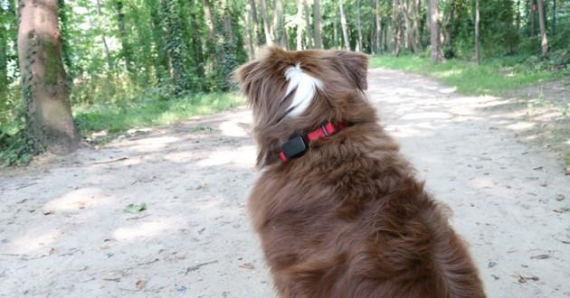 GPS pet tracker invoxia wamiz