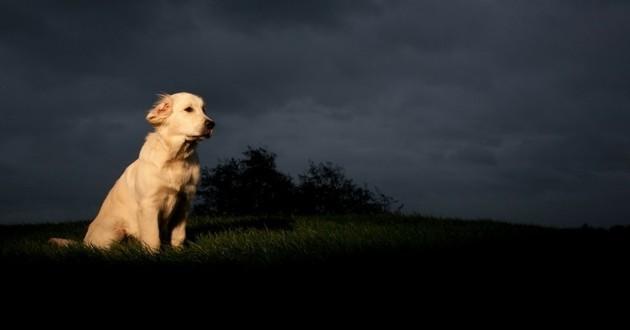 Irma chien abandon ouragan tempête