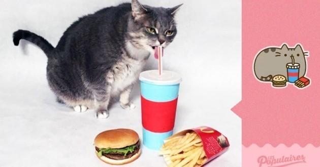 Pusheen the cat représenter avec un vrai chat