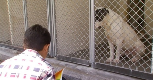 Un enfant autiste et des chiens s'entraident