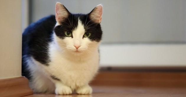 chat héroïque appelé Jacotte