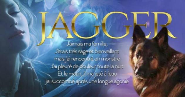 jagger chien sacrifié