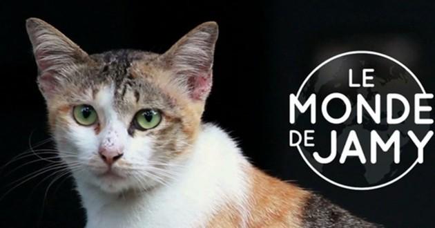 chat émission Le monde de Jamy