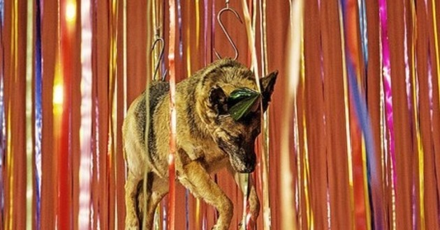 chien pendu