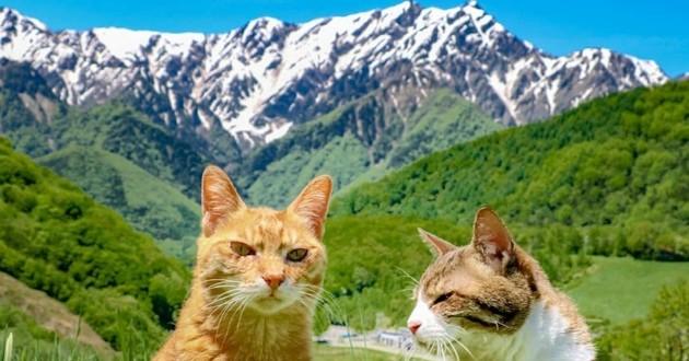 Ces chats voyagent à travers le Japon et partagent leurs aventures sur Instagram