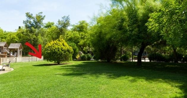 jardin chiot