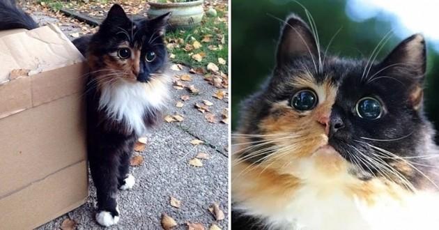 Un chat au magnifique regard s'empare du Web malgré son insoupçonnable handicap