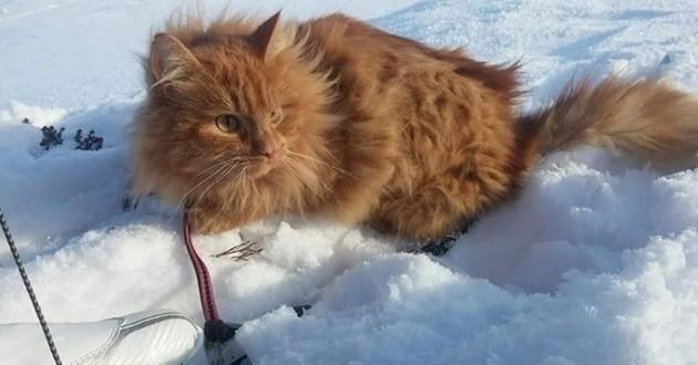 Des chiens de traîneaux ? Non, un chat en skis !