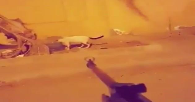 homme tire sur chat errant
