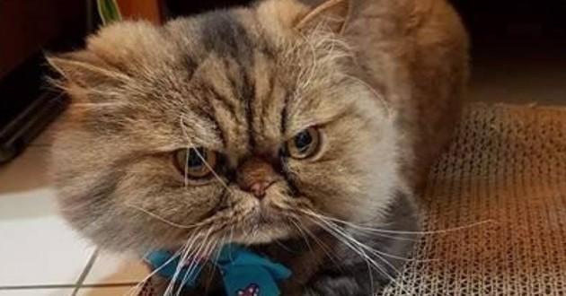 chat toiletteur catastrophe