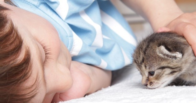 garçon famille d'accueil chatons