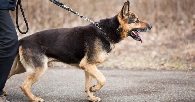 Un joggeur meurt en sauvant son chien