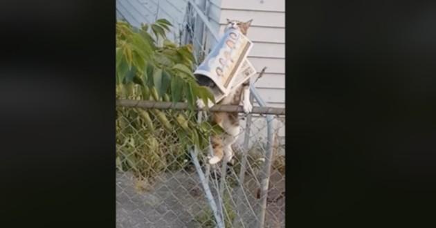 Nouvelle-Zélande : tous les matins, un chat lui apporte son journal (Vidéo)
