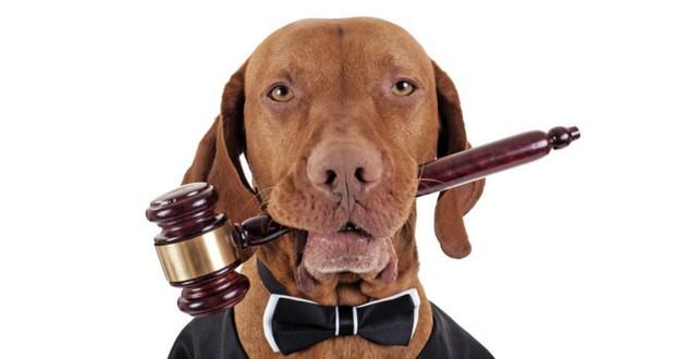 chien animal justice