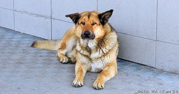 Un chien attend son maître à l'aéroport