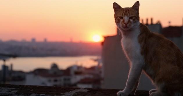 kedi chats istanbul
