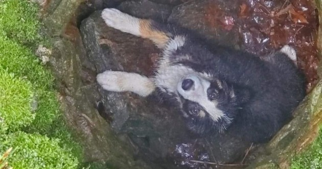 Kella le chien au fond d'un puits
