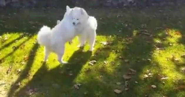 retrouvailles chiens miraculés