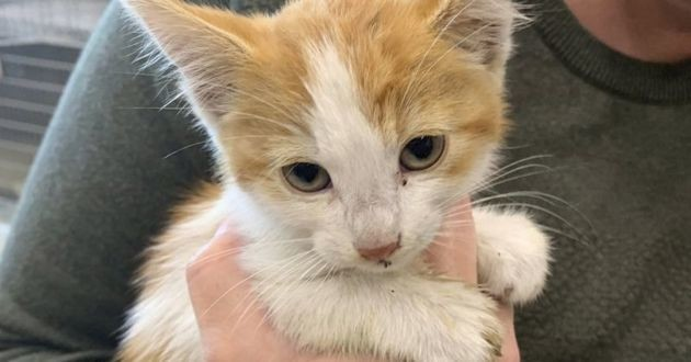 Un chaton de 6 semaines sauvé d'un égout à San Francisco