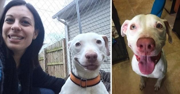 Kobe le chien souriant