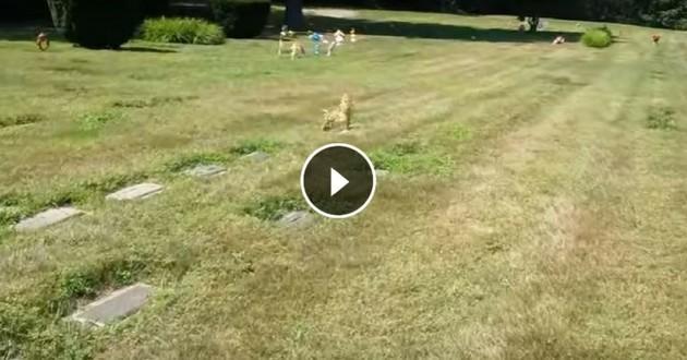 chien cimetière illusion d'optique