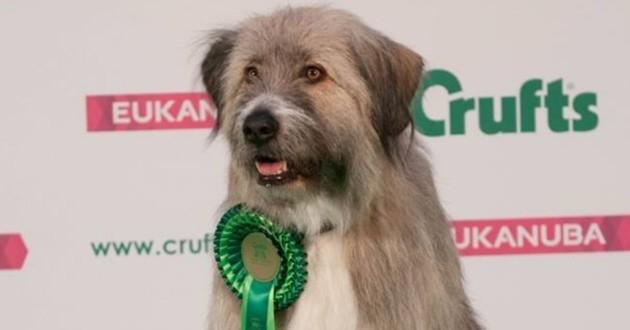 Kratu le chien reçoit une récompense pour sa participation un parcours d'agility