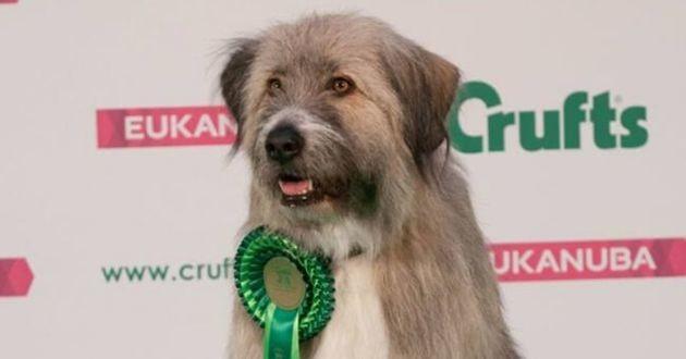 un chien avec un ruban