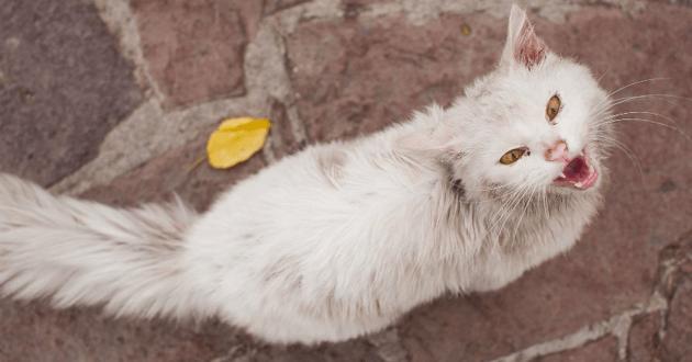 Les émouvantes retrouvailles d'une famille de réfugiés irakiens et de son chat perdu en Grèce