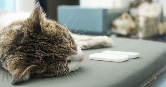 chat laboratoire