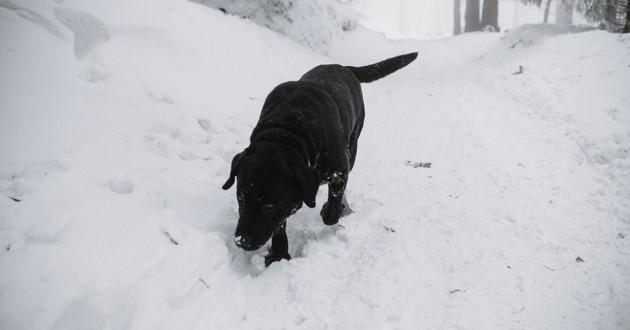 Hoock chien montagne gavarnie