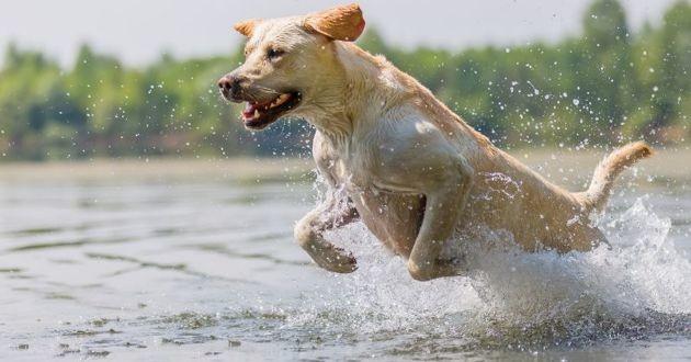 un chien dans un lac