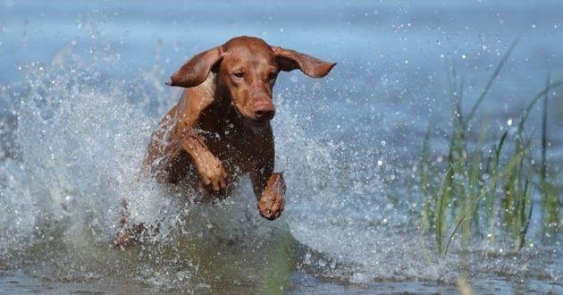 chien dans un lac