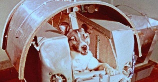 Laika la première chienne dans l'espace