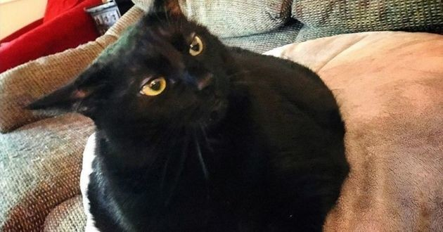 Laila chat obèse