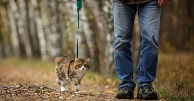 chat en laisse