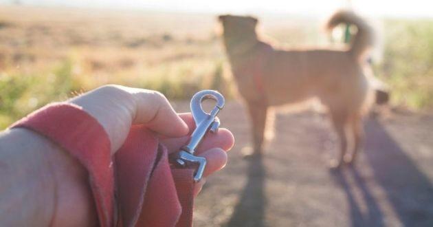 un chien sans laisse
