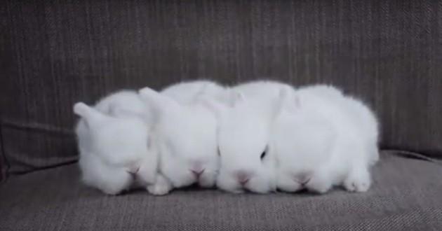 Ces lapereaux au réveil compliqué vont vous faire fondre (Vidéo du jour)