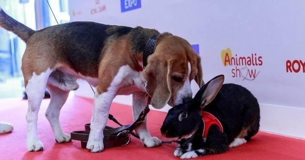 beagle lapin Salon Animal Expo & Animalis