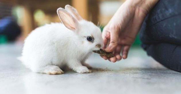 un lapin blanc