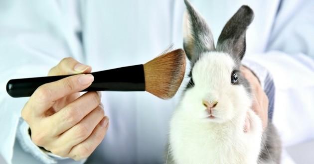 lapin cosmétique expérimentation animale