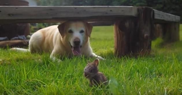Incroyable : un adorable lapereau se lie d'amitié avec un chien (Vidéo du jour)